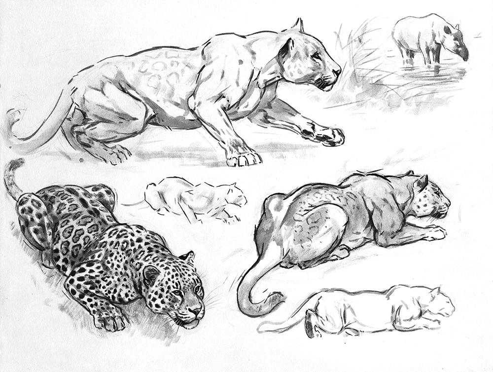 017_Jaguar