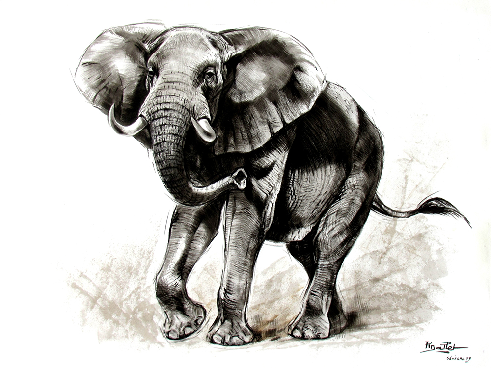 02- Elephant d'Afrique (65x50)