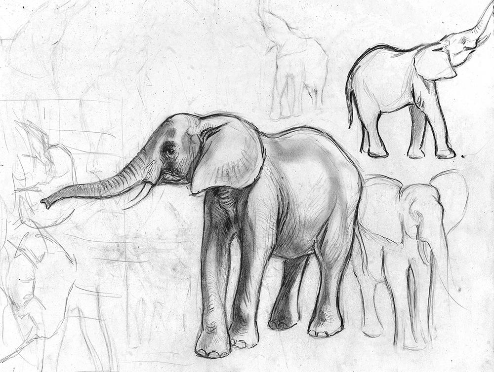 06_Éléphants d'Afrique