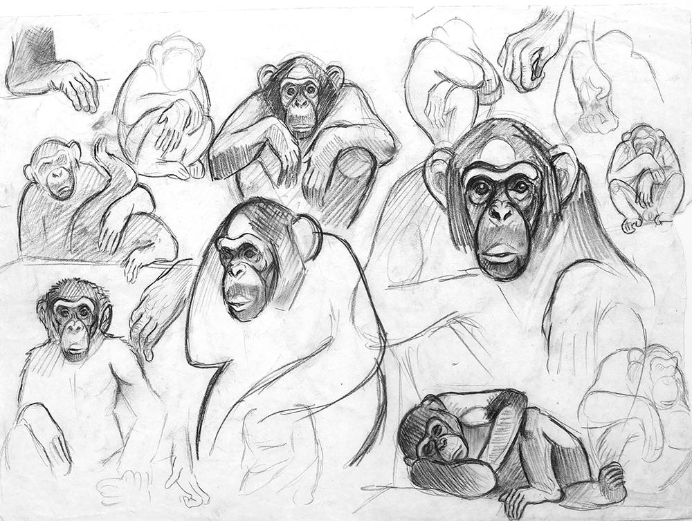 08_Chimpanzés