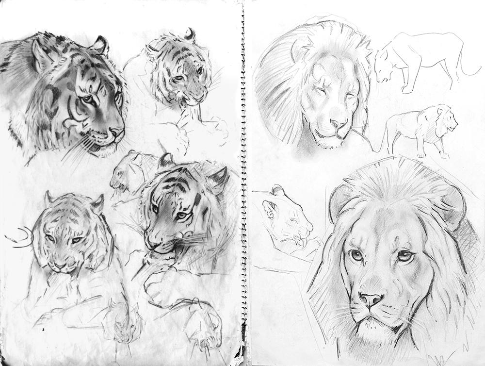 09_Panthères Noires et Lions