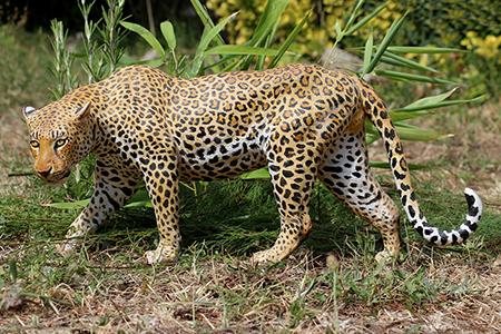 02- Panthère du Kenya