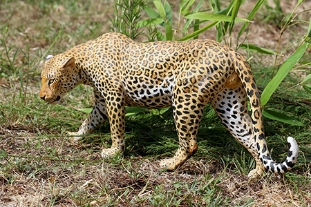 03- Panthère du Kenya