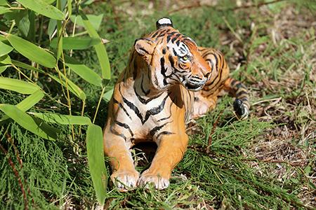 04- Tigre de l'Inde