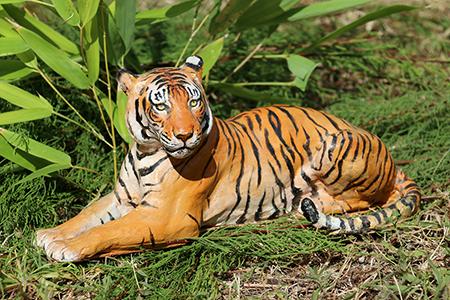 05- Tigre de l'Inde