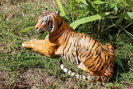 06- Tigre de l'Inde