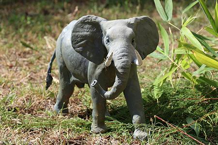 07- Eléphant dAfrique