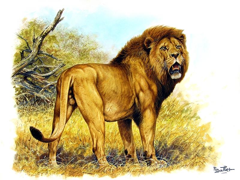 01- Lion de l'Inde (65x50)