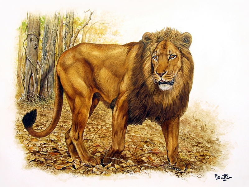 02- Tigre de Sumatra (65x50)