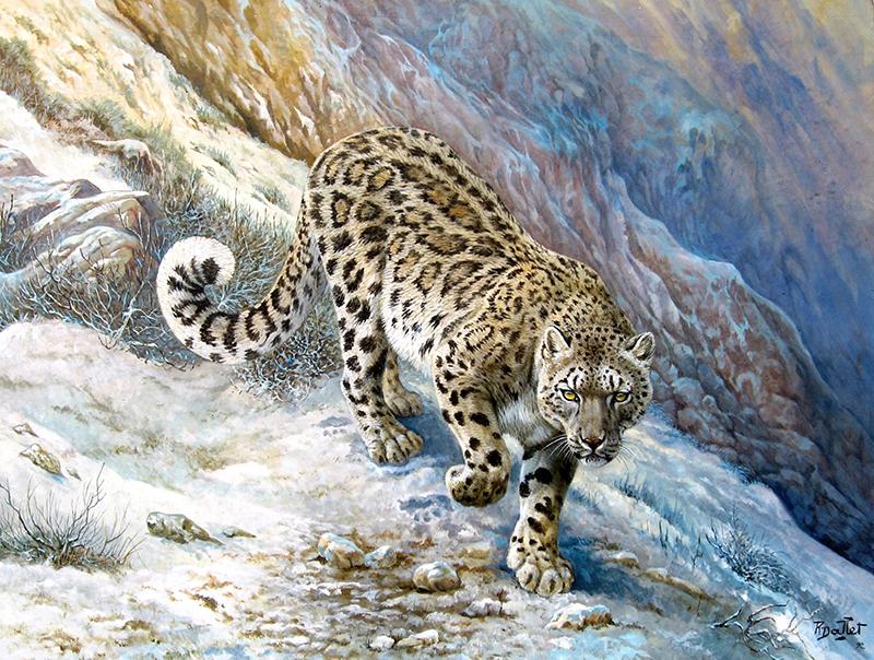 05- Panthère Longibande ou Nébuleuse (80x60)