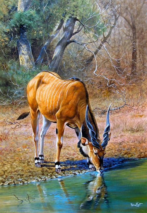 10- Gazelle Girafe ou Gerenuk (75x60)