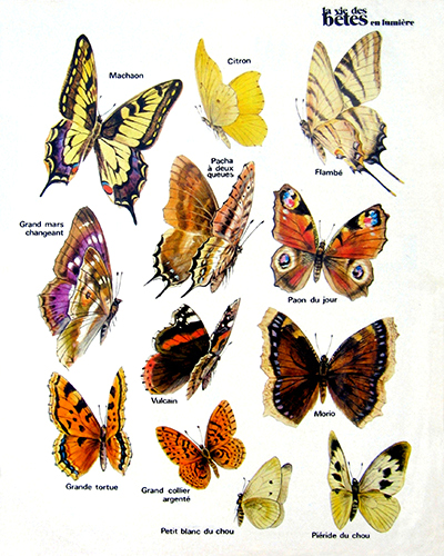 06- The Inventory of French Butterflies (July 1972)