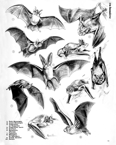 15- Bats of our Regions (April 1973)