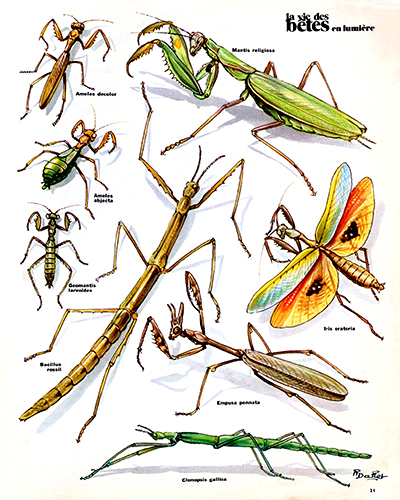 35- Mantis and Stick Insects of France (October 1974)