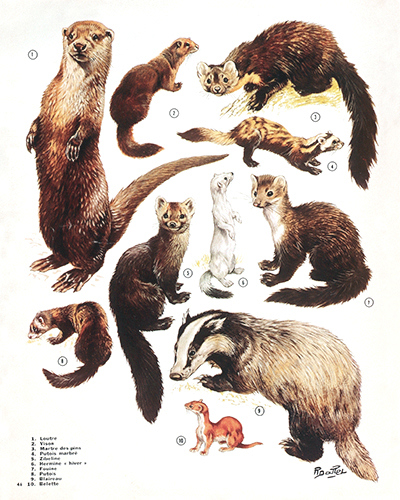 40- Polecats, Martens, Weasels...on March (March 1975)